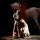 Bartabas and the Versailles Academy of equestrian arts, La Villette